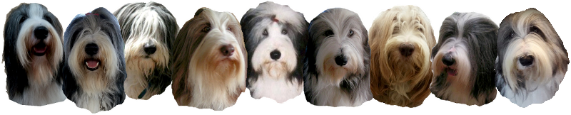 impressie bearded collies at the Beardie-Inn 1991-2016